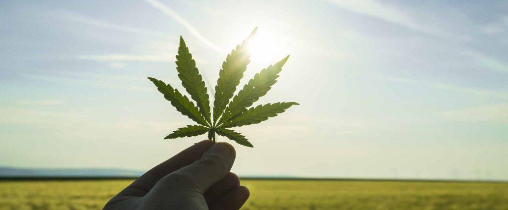 Premium Marijuana: Key to buying right